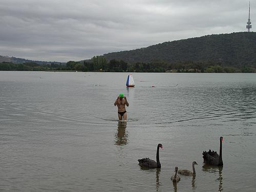 Man and Bird meet together in Lake Burley Griffin
